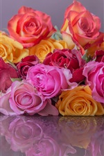 Colorful roses, pink, yellow, red