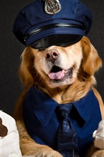 Preview iPhone wallpaper Cool dog, police, funny animals