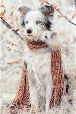 Preview iPhone wallpaper Cute dog, scarf, berries