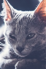 Preview iPhone wallpaper Cute gray kitten, backlight