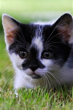 Preview iPhone wallpaper Cute kitten, grass