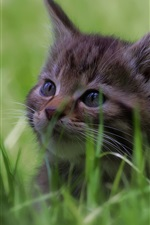 Preview iPhone wallpaper Cute kitten in the grass, face, furry