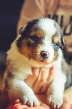 Preview iPhone wallpaper Cute pet dog on hands