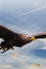 Eagle flight, predator, wings, sky