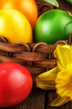 Easter, yellow narcissus flowers, colorful eggs, basket