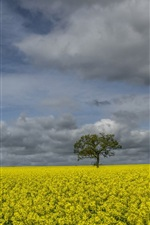 Preview iPhone wallpaper England, rapeseed flowers, windmill, trees