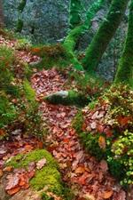 Inglaterra, árvores, floresta, outono, musgo, folhas