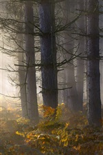 Preview iPhone wallpaper Forest, trees, fern, fog, morning