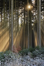 Preview iPhone wallpaper Forest, trees, frost, sun rays, winter