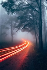 Preview iPhone wallpaper Forest, trees, light lines, fog