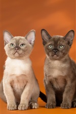 Preview iPhone wallpaper Four kittens, orange background