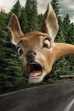 Preview iPhone wallpaper Funny animal, face, fear, long neck, road, creative picture