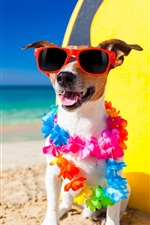 Preview iPhone wallpaper Funny dog, sunglasses, beach, sands