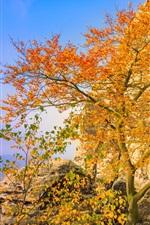 Preview iPhone wallpaper Germany, Bastei, bridge, trees, yellow leaves, autumn