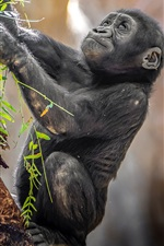 Preview iPhone wallpaper Gorilla baby
