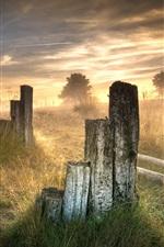 Grass, fog, morning, sunrise