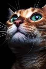 Preview iPhone wallpaper Green eyes cat look up, black background