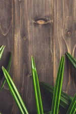 Preview iPhone wallpaper Green leaves, texture, wood board background