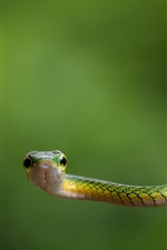 Preview iPhone wallpaper Green snake and green background