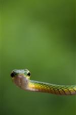 iPhone fondos de pantalla Serpiente verde y fondo verde