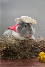 Preview iPhone wallpaper Guinea pig, dandelions flowers, hat, humor