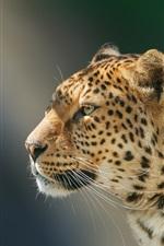 Preview iPhone wallpaper Handsome leopard, portrait, face