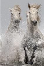 iPhone fondos de pantalla Caballos corriendo en el agua, splash, río