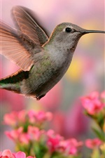 Preview iPhone wallpaper Hummingbird flight, wings, pink and purple flowers