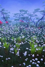 Preview iPhone wallpaper Japan, fog, haze, morning, white wildflowers
