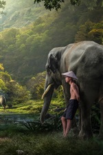 Preview iPhone wallpaper Jungle, boy, elephants, trees