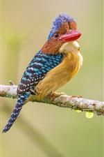Kingfisher, red beak