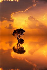 Preview iPhone wallpaper Lake, lonely trees, water reflection, sunset