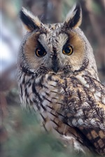 Preview iPhone wallpaper Long-eared owl, bokeh