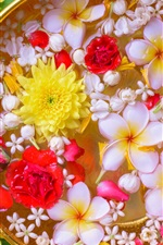 Preview iPhone wallpaper Many flowers in the water, chrysanthemum, plumeria, roses
