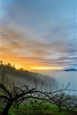 Preview iPhone wallpaper Morning, fog, trees, sunrise, lake, clouds