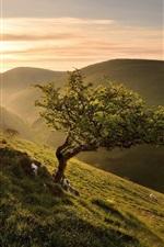 iPhone fondos de pantalla Mañana, pendiente, árbol, hierba, verde, salida del sol