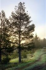 Morning, trees, grass, path, slope, fog