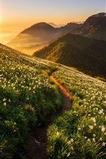 iPhone fondos de pantalla Montañas, orquídea, flores, pendiente, salida del sol
