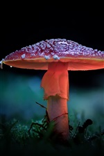 Preview iPhone wallpaper Mushroom, forest, backlight