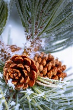 Preview iPhone wallpaper Pine tree, twigs, frost, winter