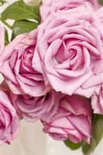 Pink roses, flowers, petals