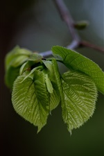 Preview iPhone wallpaper Plants, green leaves, bokeh