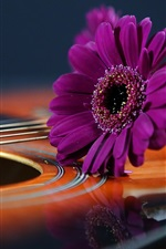 Purple daisy, guitar