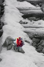 Preview iPhone wallpaper Railroad, snow, red rose, frost