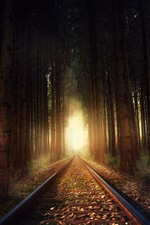 Preview iPhone wallpaper Railroad, trees, forest, light