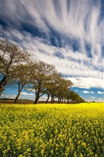 Preview iPhone wallpaper Rapeseed flowers, trees, field, clouds, summer