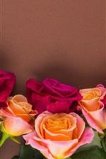 iPhone fondos de pantalla Rosas rojas y anaranjadas, fondo de la pared