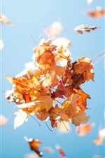 Preview iPhone wallpaper Red maple leaves, blue sky, autumn