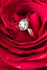 Red rose, diamond ring, romantic