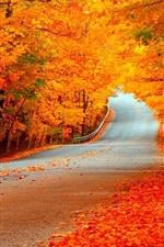 iPhone fondos de pantalla Camino, árboles, oro otoño